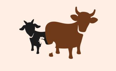 Datasets in Animal Husbandry Sector